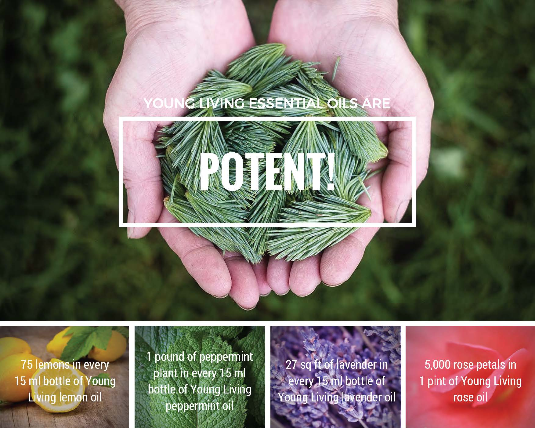 7 reasons why essential oils rock